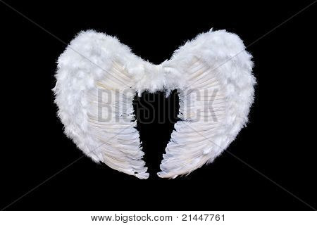 White Angel Wings
