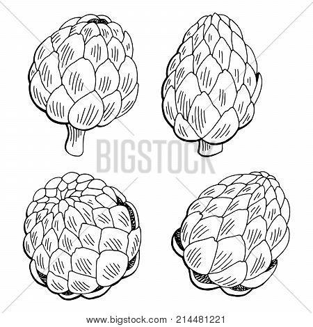 Artichoke plant graphic black white isolated sketch illustration vector