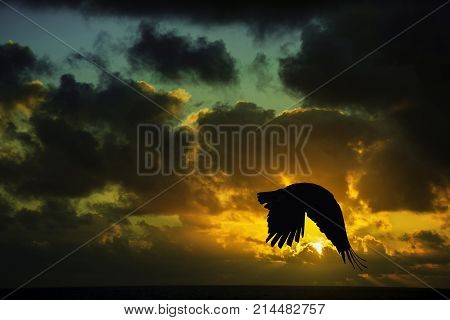 Sunrise in Los Cocoteros with flying raven - Lanzarote, Canary Islands, Spain