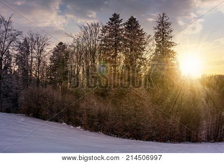 Forest On Snowy Hillside At Sunset