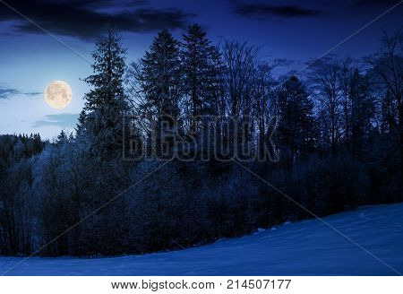 forest on snowy hillside at night in full moon light. beautiful nature background