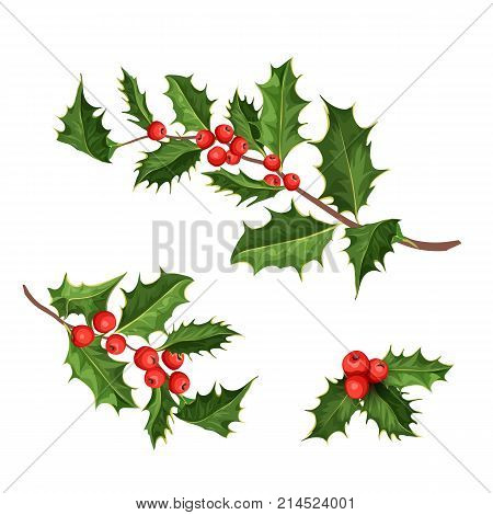 vector realistic hand drawn holly, ilex branch with berry and leaves, mistletoe set. Christmas, new year holiday celebration symbol. Isolated illustration on a white background.