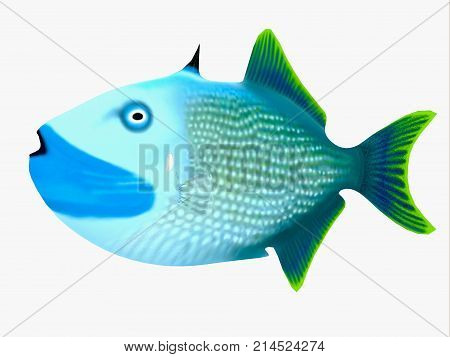 Blue Jaw Triggerfish 3d illustration - The Blue Jaw Triggerfish is a saltwater species reef fish in tropical regions of major oceans.