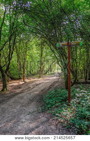 Forest path with sign post and lovely dappled lighting. Summer shot looking along the path.