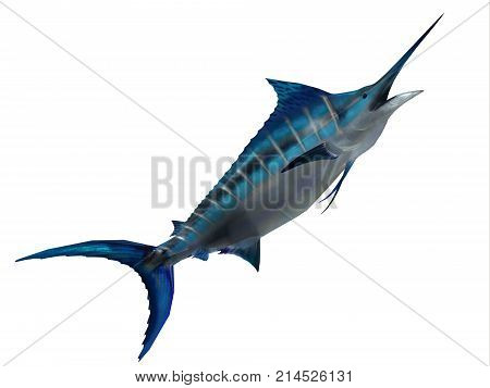 Predator Marlin Fish 3d illustration - The Blue Marlin is a favorite fish of sport fishermen and one of the predators of the Atlantic and Pacific oceans.