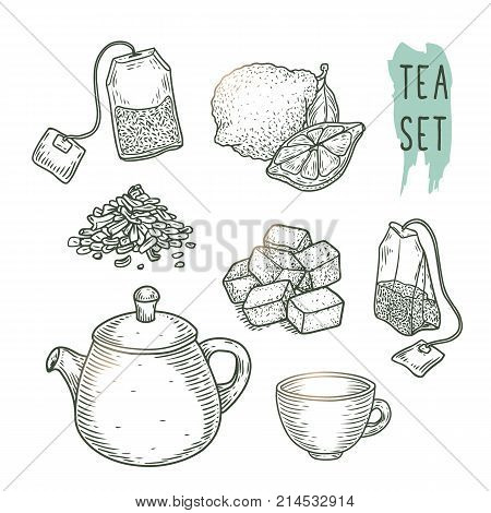Sketch of tea elements include teapot, teabags, cup, sugar, bergamot and dry leaves. Vector illustration with realistic icons good for a logo, banner, flyer creation or cafe menu.