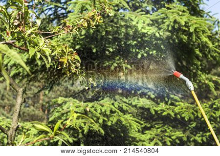 Spraying a sick fruit tree. The mist emerges from the spray lance.