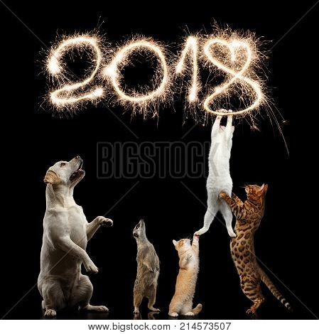 Cats Dog and meerkat preparing for the new 2018 year decorate sparklers digits or kitties want to steal Christmas on isolated Black Background