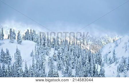 Mountain forest covered by snow after heavy snowfall. Switzerland. Bernardino. Europe.