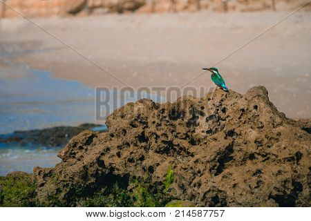 Common Kingfisher Alcedo Atthis Bird Sitting On The Sea Rock At The Beach In Israel