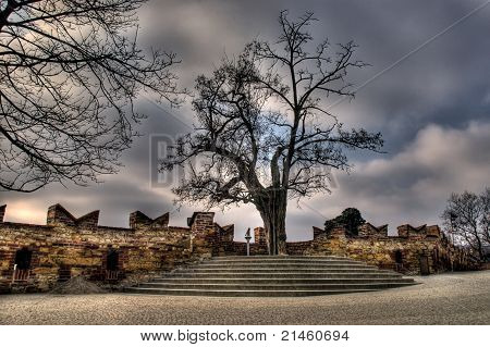 Old castle tree in Prague