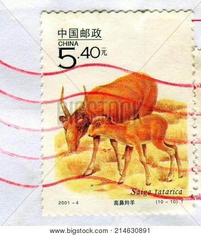 GOMEL, BELARUS, 27 OCTOBER 2017, Stamp printed in China shows image of the Saiga tatarica, circa 2001.
