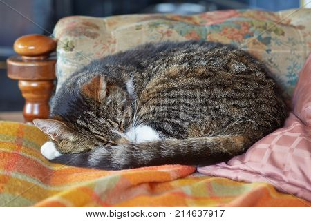 Sleeping cat curled up in a cozy environment