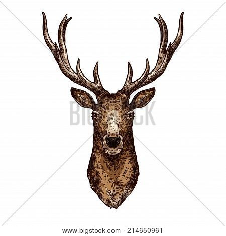 Deer isolated sketch of wild forest animal. Brown deer, elk or reindeer head with large antlers vector icon for hunting sport emblem, zoo mascot, t-shirt print design