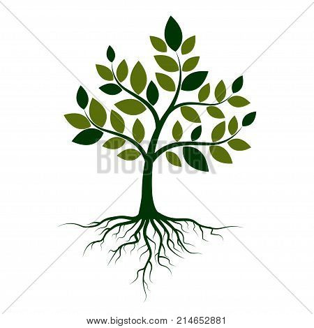 Green tree with roots on a white background. Vector Illustration.