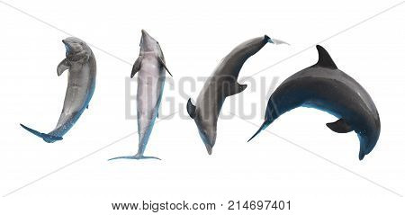 Row of jumping and leaping dolphins isolated on white background