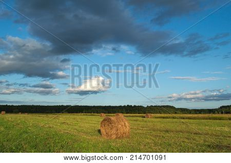 Cylinder haystacks in the field. Hay just harvested. A part of grass is not harvested yet.