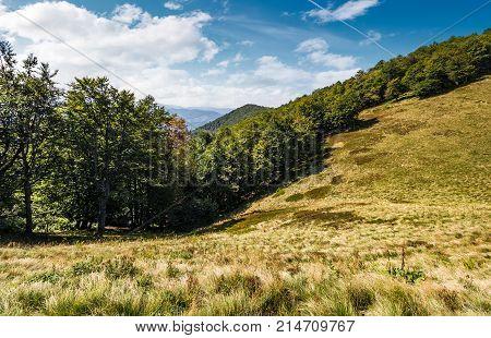 Forest On Grassy Hillside Of Carpathians