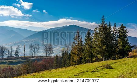 Spruce Trees At Volovets Serpentine In Carpathians
