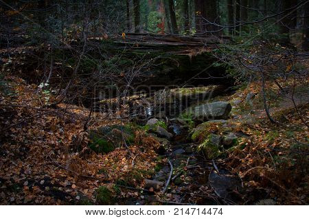 Incredible fallen giant Sequoia tree over a babbling brook with beautiful autumn leaves in Sequoia National Park.