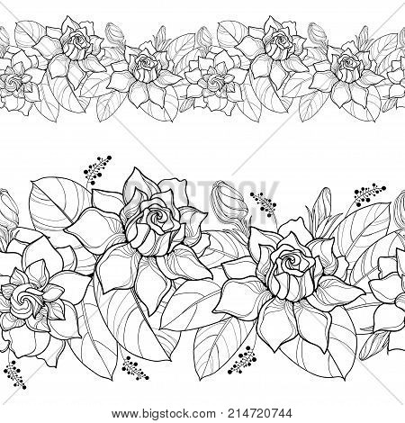 Vector seamless pattern with outline Gardenia. Ornate flower, bud and leaves in black on the white background. Floral border with Gardenia in contour style for summer design and coloring book.