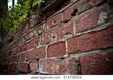 Dented wall of red brick. Overgrown ruin. Close up view. Selective focus.