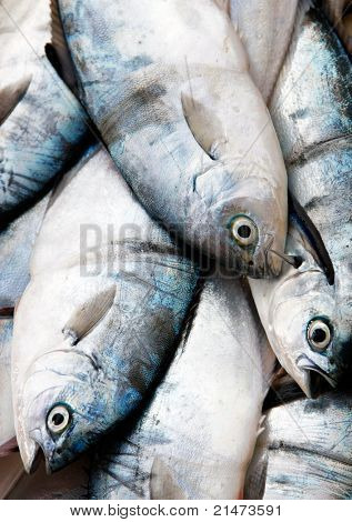 Fresh fish at market
