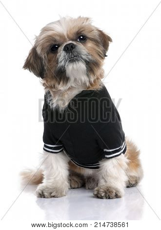 Shih Tzu dressed-up (6 years old) in front of a white background