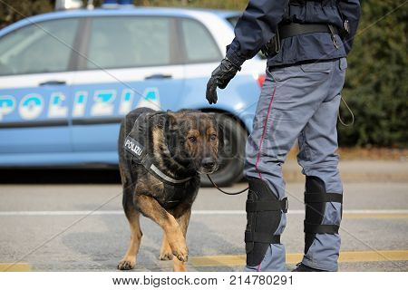 Vicenza, Vi, Italy - January 28, 2017: German Shepherd Police Do