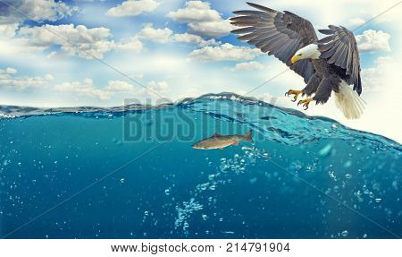 eagle catch fish in thew sea water