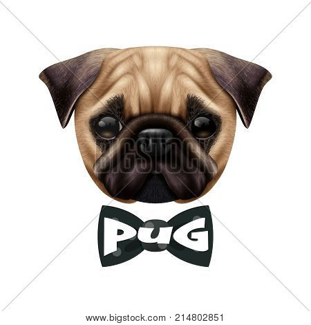 Colored isolated realistic pug dog portrait with big cute head and the bow tie vector illustration