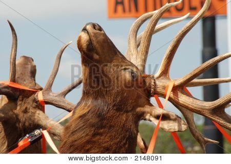 Tied Elk