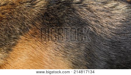Dog fur texture. Natural pattern of black and light brown dog's fur texture for background.
