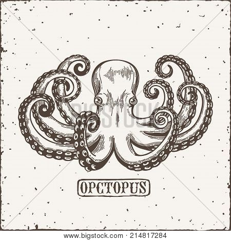Octopus engraving. Vintage black engraving illustration. Retro style card. Isolated on white background. Vector illustration