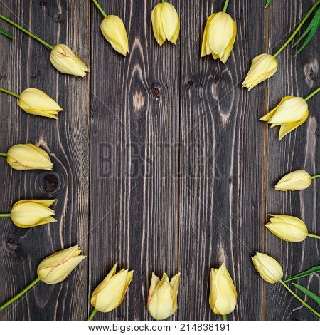 Round frame of yellow tulip flowers on rustic wooden background copy space. Spring flowers. Spring background. Holiday greeting card for Valentine's Day Woman's Day (March 8) Mother's Day. Top view flat lay. Easter spring concept