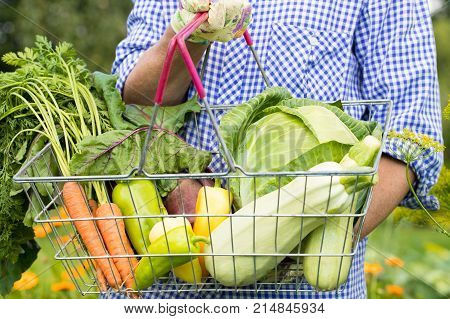 Adult / Elderly Woman In Blue-White Shirt Holds Metal Wicker Basket With Fresh Ripe Vegetables Outdoor. Seasonal Time Harvesting Vegetables From Garden.