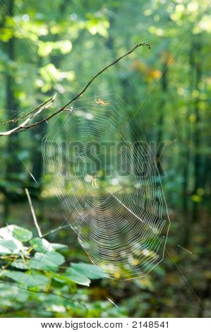 Spider And Net