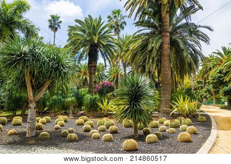 Amazing view of cactus park area in Garcia Sanabria park. Location: Cacti garden in Santa Cruz de Tenerife Tenerife Canary Islands. Artistic picture. Beauty world.