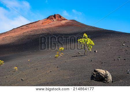 View of the Arenas Negras near volcano Teide Teide National Park Tenerife Canary Islands Spain