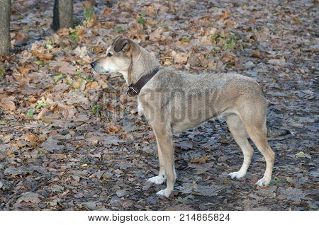 My dog in an autumn park portrate