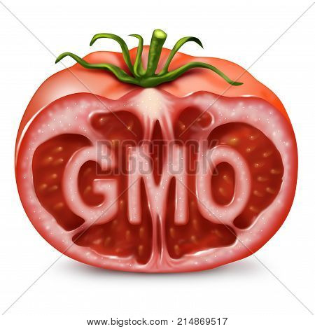 GMO food symbol as a genetically modified organism and genetic engineering in produce as a cut tomato with text inside as in a 3D illustration style.