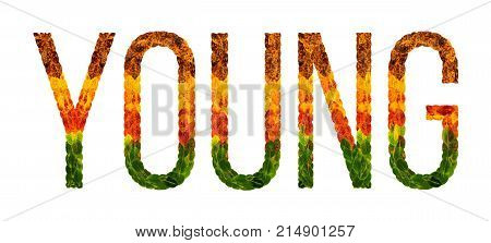young word is written with leaves white isolated background