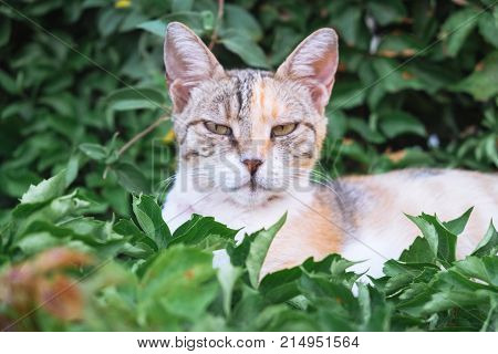 Homeless incredulous cat watches stranger lying in the grass. Serious street kitty cat under sun light with beautiful eyes.