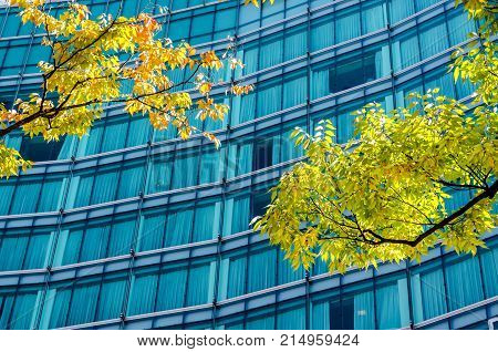 Tree Shade And Building In Business Zone