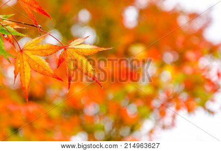 Abstract Blur Red Leaf On The Autumn Time