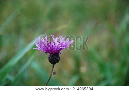 Pink flower head by a natural green background