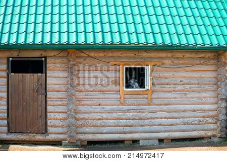 Donkey looks out the window of a wooden house