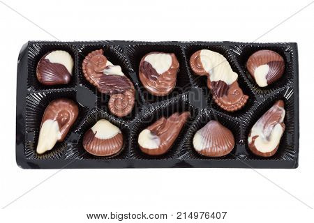 Tray of Belgian milk chocolate bonbons shaped as seashells with clams, seahorses and isolated on white background, cut out or cutout