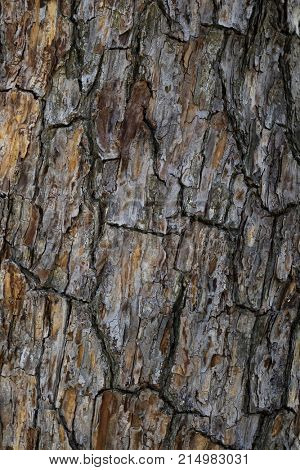 Weathered old wooden tree bark full frame