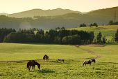 Nice idyll morning with horses in meadow poster